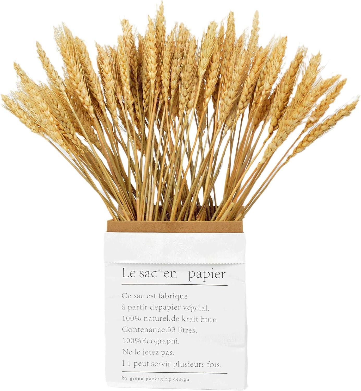 Green fireworks Kraft Paper Flower Arrangement Bag Contains 100 PCS Dried Natural Wheat Stalks ,15
