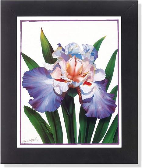 Iris Flower Floral Arrangement Wall Picture Framed Art Print Posters Prints