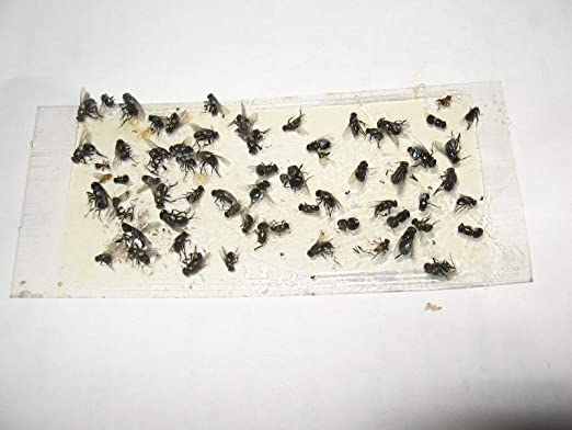 Amazon.com: 10 Pk Camel Cricket/Roach/Scorpion trampas ...