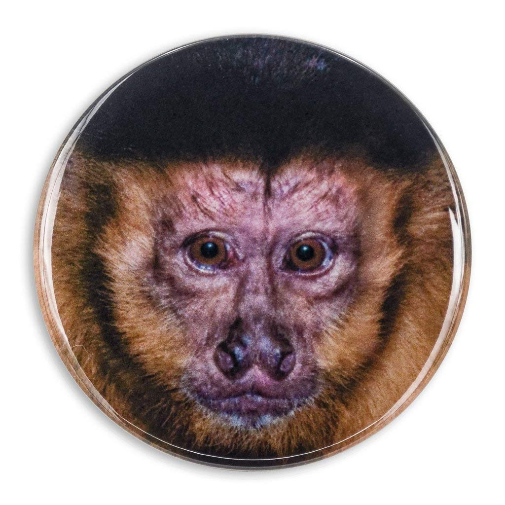 Capuchin Monkey Organ Grinder Kitchen Refrigerator Locker Button Magnet