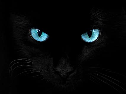 Amazon Com Black Cat Blue Eyes Panther Photo Art Picture Poster Print Posters Prints