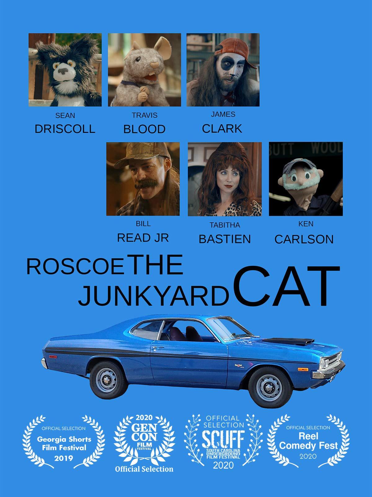 Roscoe the Junkyard Cat