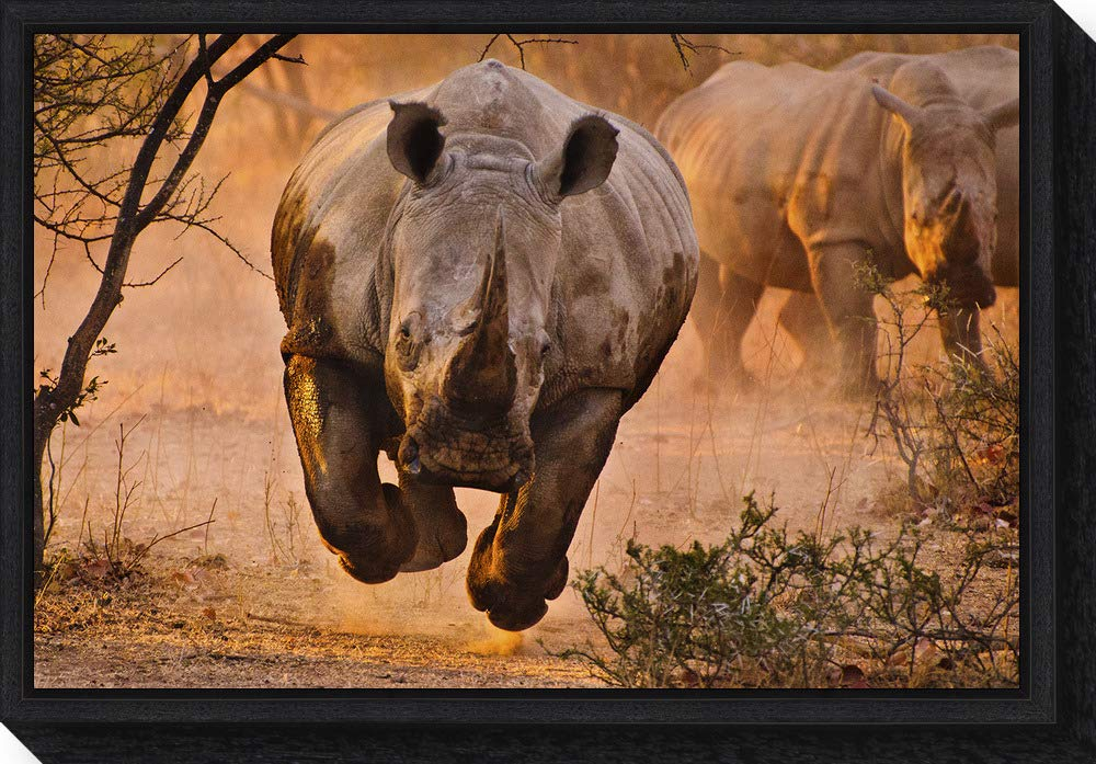 Framed Canvas Wall Art Print Rhino Learning to Fly by Justus Vermaak 23.25 x 16.00