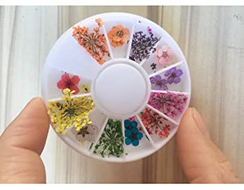 Amazon 1 Pack Colorful Natural Dried Flowers Nail Art