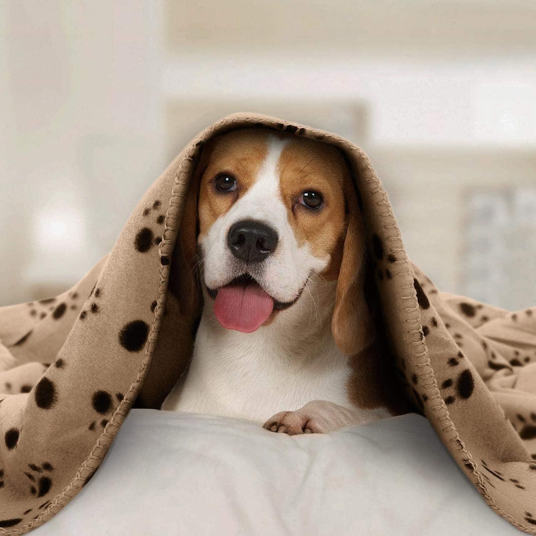 Nobleza – 6 x Manta Suave de Felpa para Perros, Gatos y Otras Mascotas. Lavable. Color Beix, 120 * 100 cm: Amazon.es: Productos para mascotas