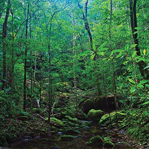 JP London SQCNV2343 Canvas Art Tropical Forest Path Amazo...