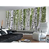 (99x164) Forest of Birch Trees Huge Wall Mural