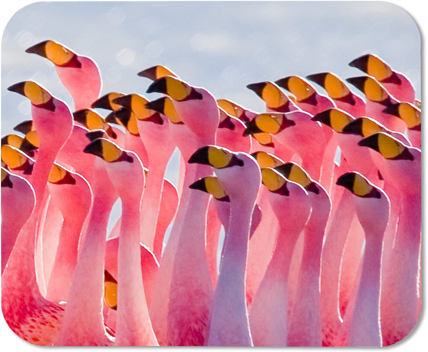 Mouse Pad Flamingos Partying Customized Rectangle Mousepad