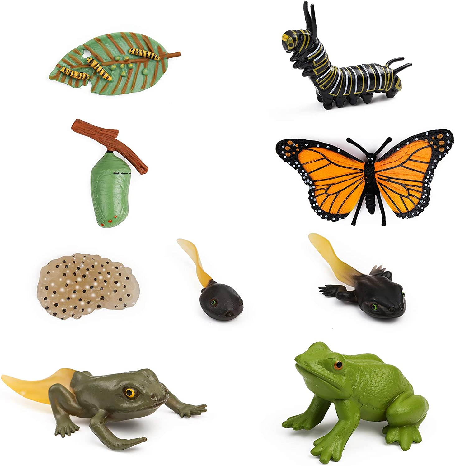 UANDME Life Cycle Figurines of a Monarch Butterfly and a Frog Realistic Education Insects Life Stages Figures for Learning and Teaching Aids