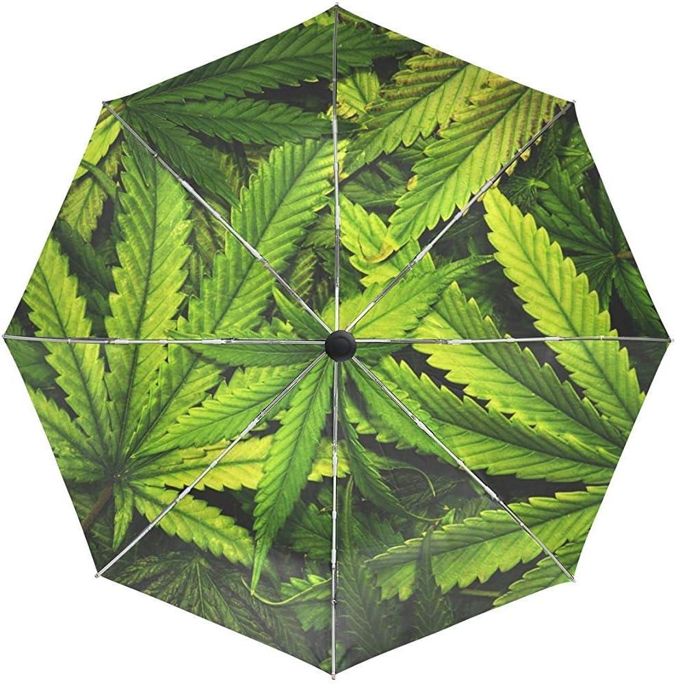 Vívido Cannabis Marihuana Leaf Umbrella Auto Rain Windproof Compact 3 Plegable Travel Umbrella Protección UV