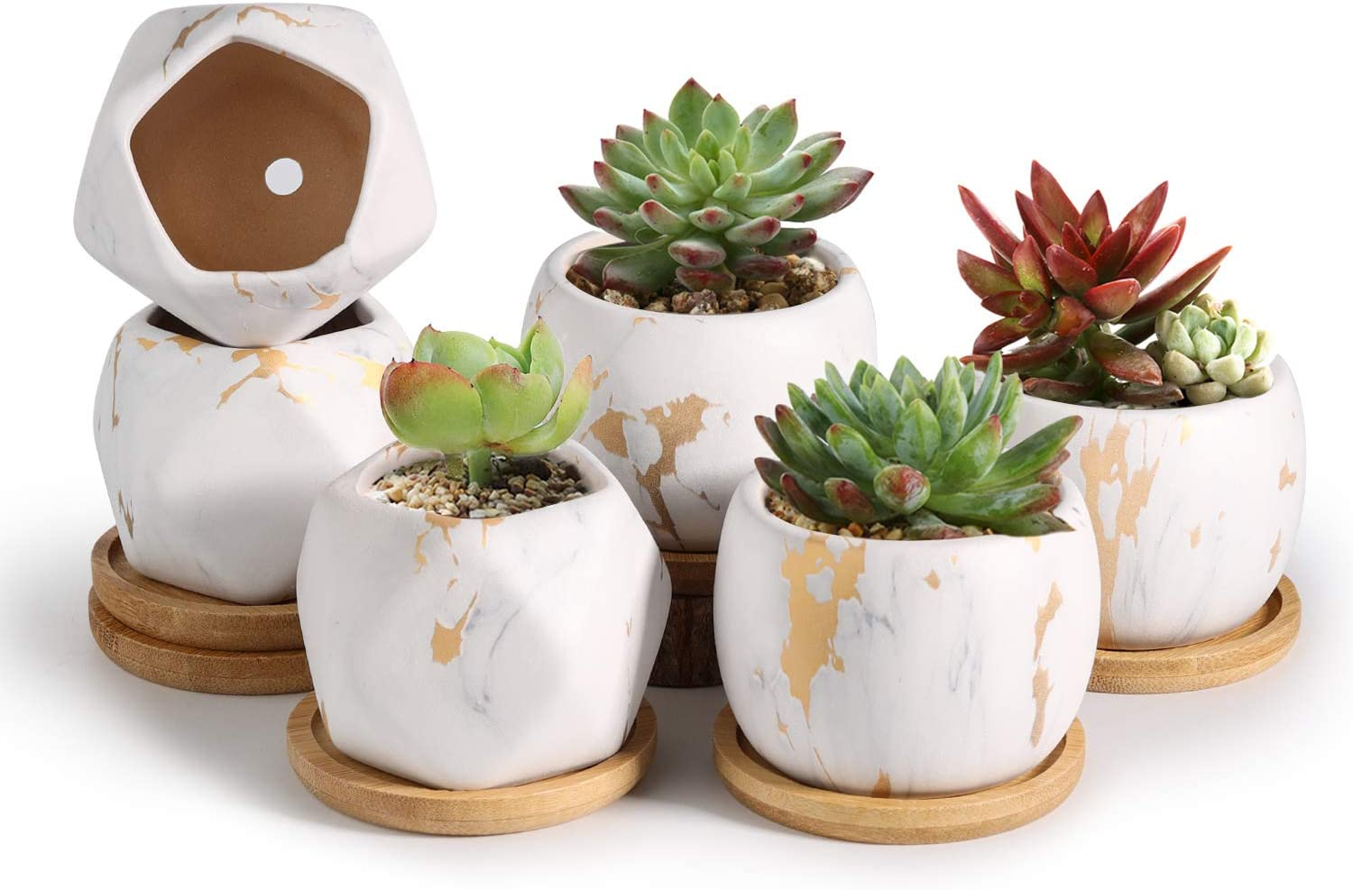 T4U 2.5 Inch Succulent Garden Pot with Bamboo Tray, Small Ceramic White and Gold Windowsill Plant Pot Cactus Herb Planter for Home and Office Decoration Birthday Wedding Christmas Gift Pack of 6