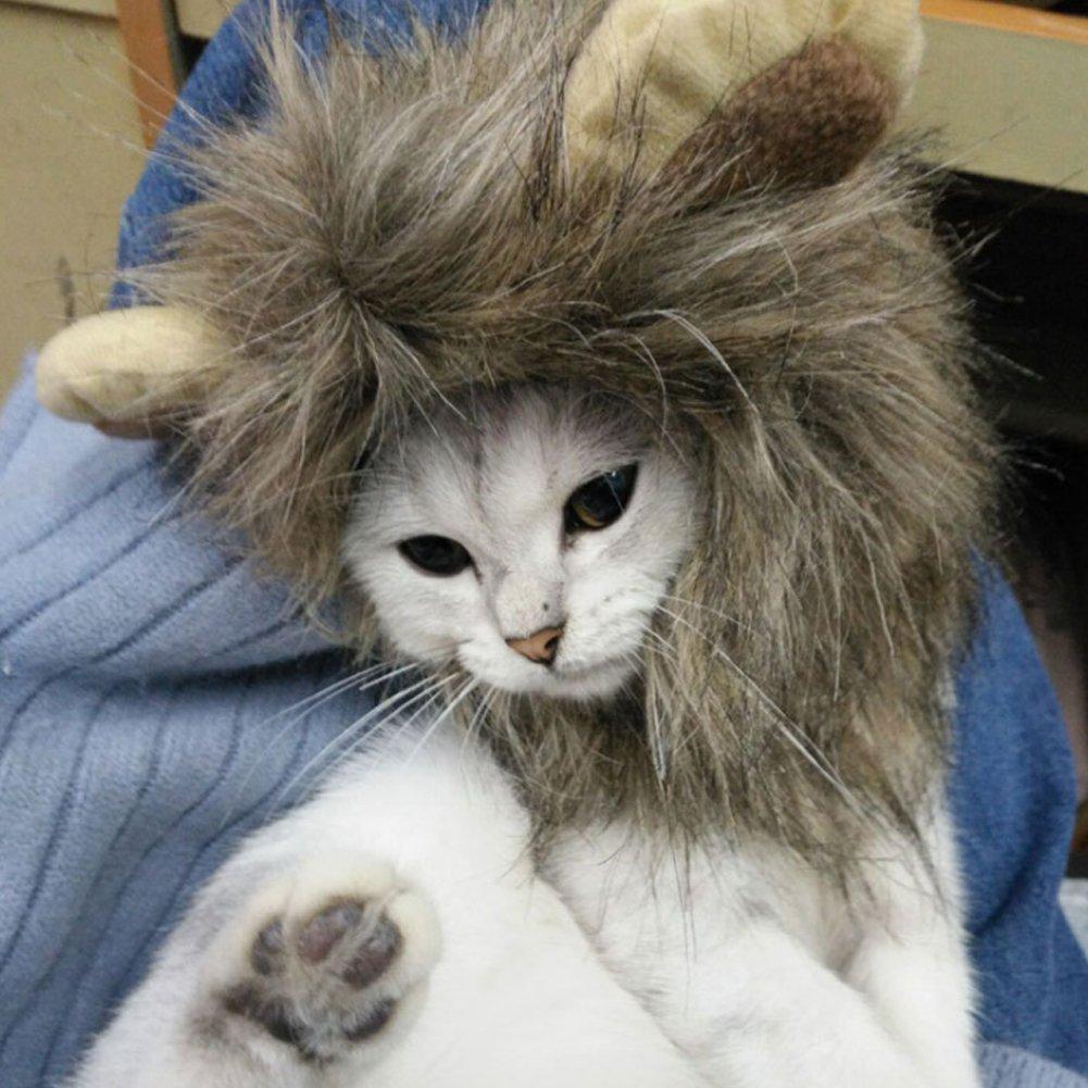 negozio a basso costo Pet cappelli, gatto gatto gatto cane cappello con fasce in velcro, cappelli di anatra anatra, Palm per Pet gatto e piccolo cane  presa