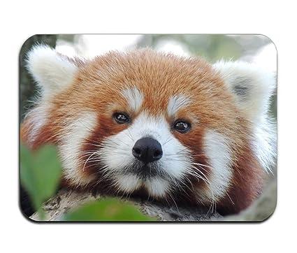 FunnyLife Free Red Panda Wallpaper Door Mat For Indoor OutdoorEntryGarage
