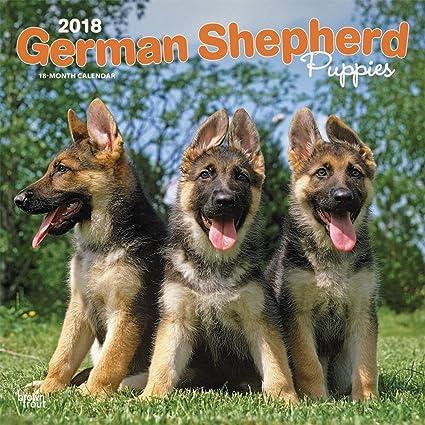 Amazoncom German Shepherd Puppies 2018 Wall Calendar Office