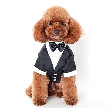 Mascotas Fiesta Traje Formal Traje Ropa abrigo para Perros Ropa M: Amazon.es: Hogar