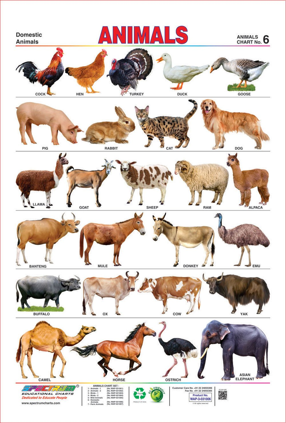domestic animals for kids with information Kids learn about the horse including terminology, colors, food, wild horses and more.
