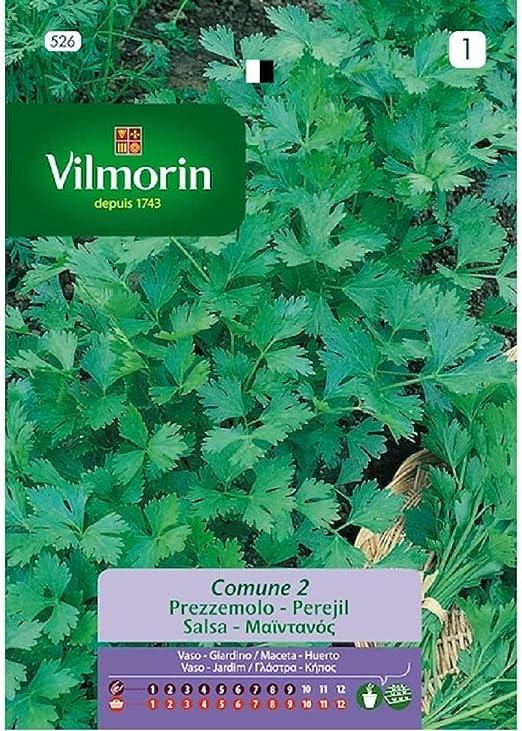 Semillas de PEREJIL COMUNE 2 Vilmorin - Sobre 14g: Amazon.es: Jardín