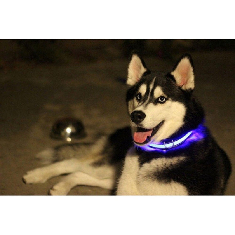 L, Verde Massima visibilit/à Notturna Tanti Colori e Taglie dalle XS alla XL Media e Grande Ducomi Collare Cane Luminoso a LED per Taglia Piccola