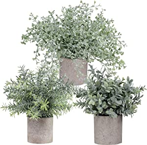 "Winlyn Mini Potted Plants Artificial Flocked Eucalyptus Boxwood Rosemary Greenery in Pots Faux Potted Herbs Small Houseplants 8.8""-10"" Tall for Indoor Greenery Tabletop Décor Centerpiece 3 Pack"