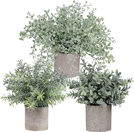 Amazon Com Winlyn Mini Potted Plants Artificial Flocked Eucalyptus Boxwood Rosemary Greenery In Pots Faux Potted Herbs Small Houseplants 8 8 10 Tall For Indoor Greenery Tabletop Décor Centerpiece 3 Pack Home Kitchen