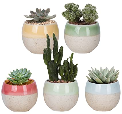 Christmas Flower Pots.Vencer Christmas Gift Mini Ceramic Cute Five Color Flower Pots Office Desktop Potted Stand Home Office Decor Accent Ideal For Small Succulent Set Of