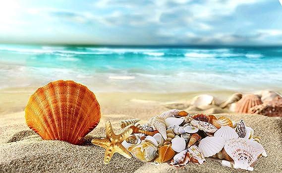 BELLE VOUS Conchas de mar Surtidas (130 Piezas) - Coloridas Conchas decoración en el Hogar Decorar Velas, Boda con Tema en la Playa, Manualidades, ...