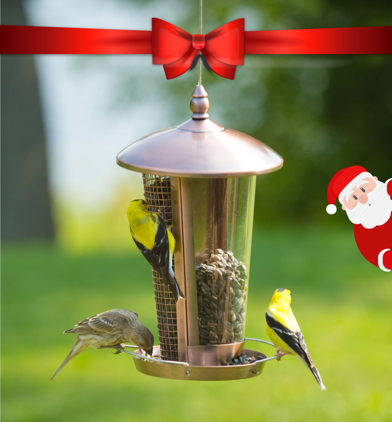 Wild Bird Feeder Attract More Birds Perfect for Garden Decoration, Great Bird Feeders for Small & Medium Birds, Easy to Clean and Fill Bird Feeder Hanger Included Great Gift & Fun Idea!