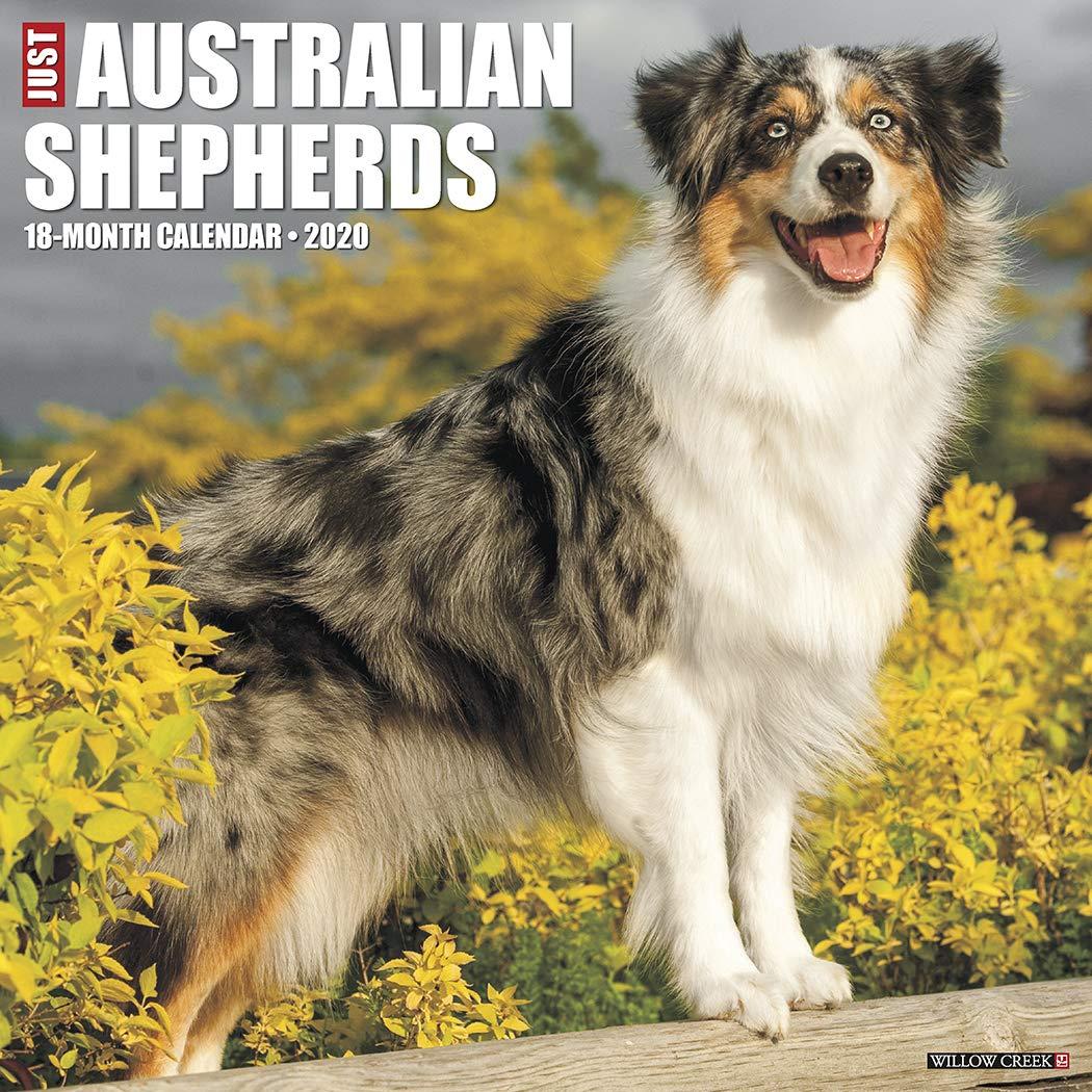 Australian Shepherd (Aussie) Books
