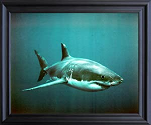 Impact Posters Gallery Wild Great White Shark Ocean Animal Wall Decor Black Framed Picture Art Print (19x23)