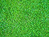 Microclover Seed (5000 SQFT)