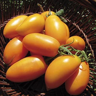 Tomato Seeds Golden banana Heirloom Vegetable Seeds / average early : Garden & Outdoor