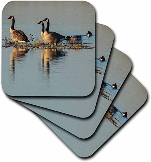 Branta Canadensis Ceramic Tile Coaster Basket Slough NWR Oregon Canada Geese Set of 4 3dRose CST/_205273/_3 USA