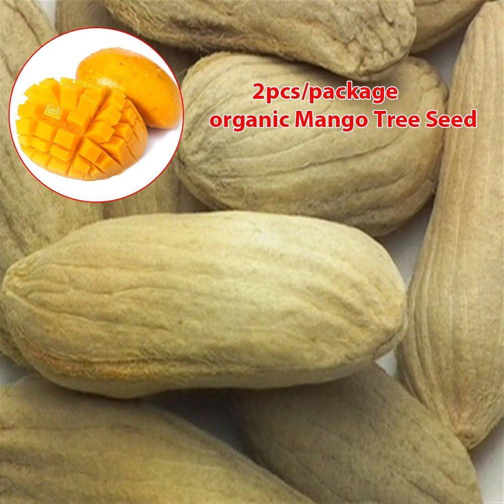 TOPmountain Semillas de árbol de Mango,2 Piezas de Semillas de Plantas de Frutas orgánicas para la plantación de huertos caseros,fáciles de Cultivar