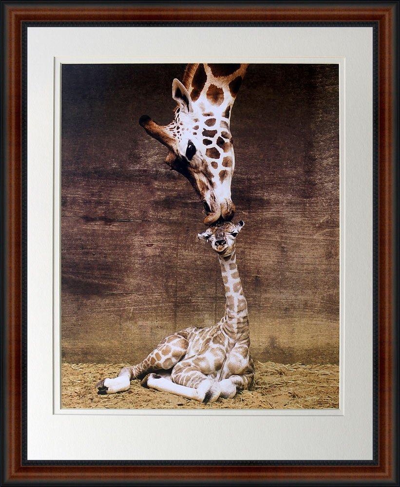 Giraffe, Mother Love, First Kiss by Ron D'Raine. Framed Art Photo. Custom Made Real Wood Dark Walnut with Black Trim Frame (18 1/4 x 22 1/4)
