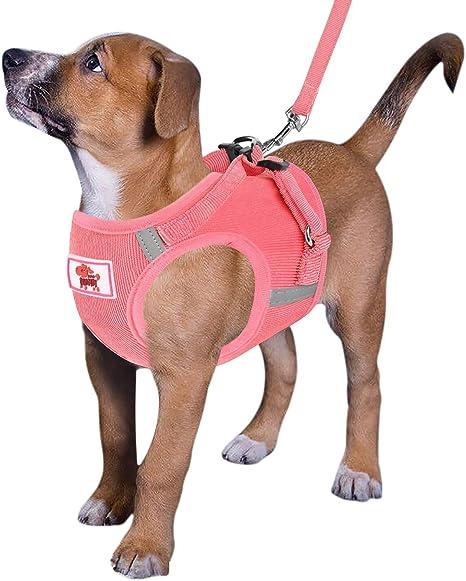 XIAO Arnés para Perros Sin Tirón Caminar Confort Comodidad ...