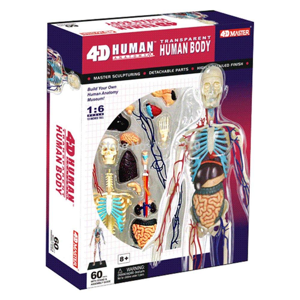 4D Maniquí, 4D Modelo anatómico de 13 \