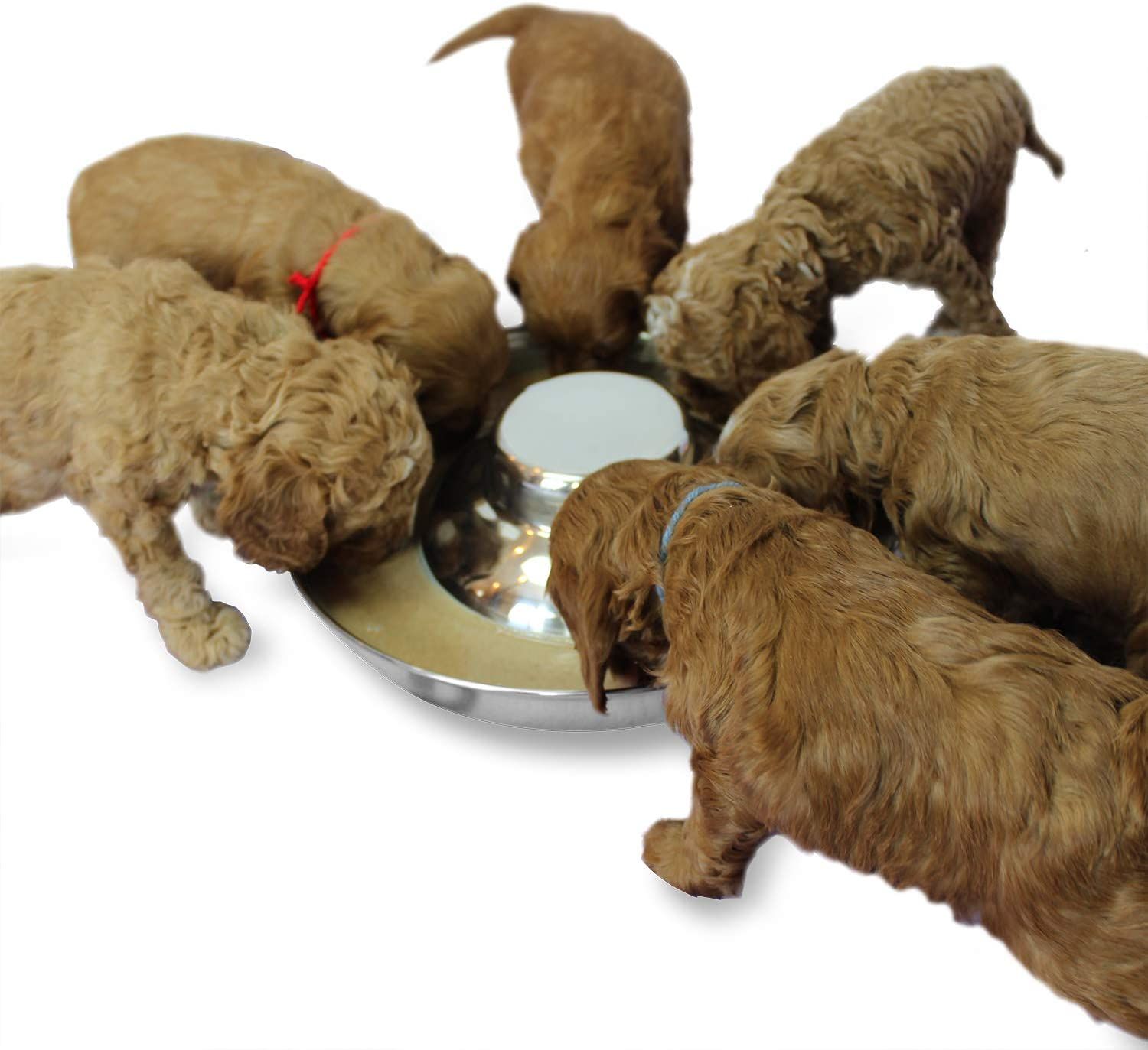 Podinor Stainless Steel Puppy Dog Bowls, Pets Puppies Feeding Food and Water Weaning Bowls Dishes Feeder