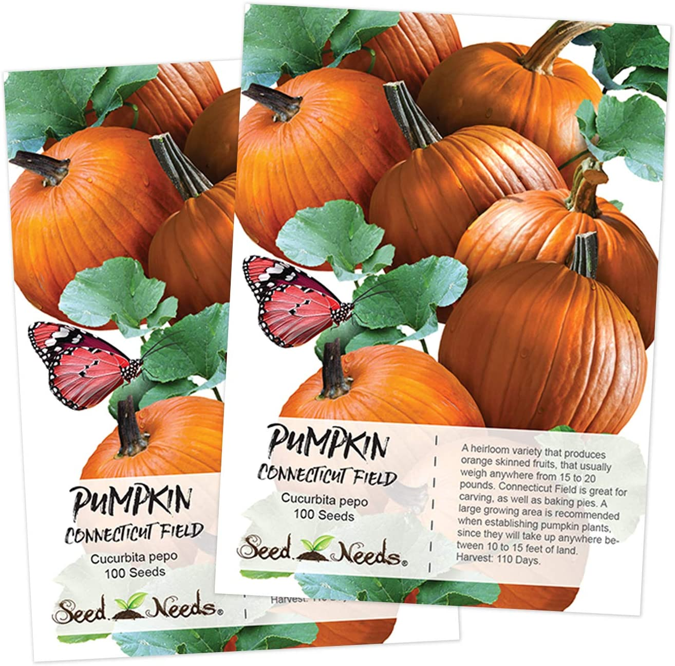 Seed Needs, Connecticut Fields Pumpkin (Cucurbita pepo) 2 Packages of 100 Seeds NON-GMO