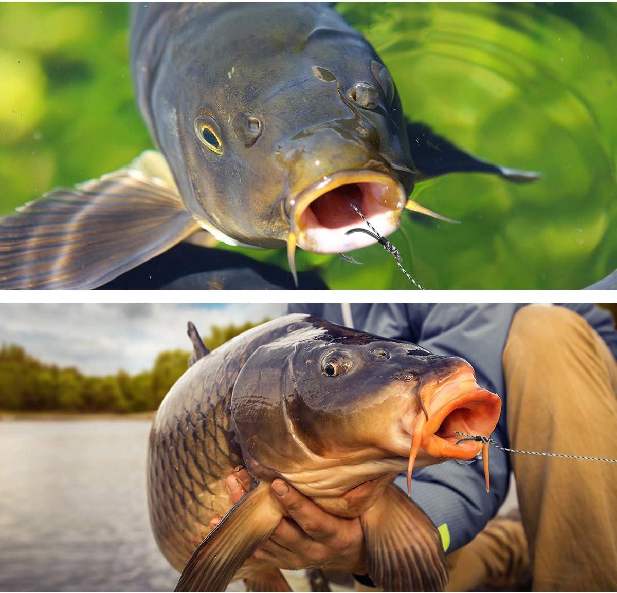 8 Luroad Misura 2 ami curvi spinati per Pesca alla Carpa Filo Intrecciato con 3 Carte di Esche 4 Set per Pesca alla Carpa Fermi manubri e ago per Stringer 20 Pezzi Anti-groviglio 6