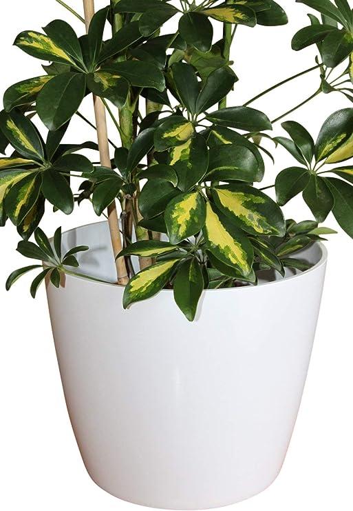 Piante Da Appartamento In Vaso.Qualita Grande Vaso In Plastica Bianco Per Ideale Per Piante Da