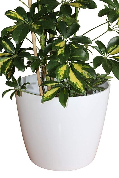 Piante Da Appartamento Amazon.Qualita Grande Vaso In Plastica Bianco Per Ideale Per Piante Da