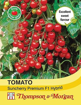 86450d76adf Thompson & Morgan - Vegetables - Tomato Suncherry Premium F1 Hybrid - 5  Seed: Amazon.co.uk: Garden & Outdoors