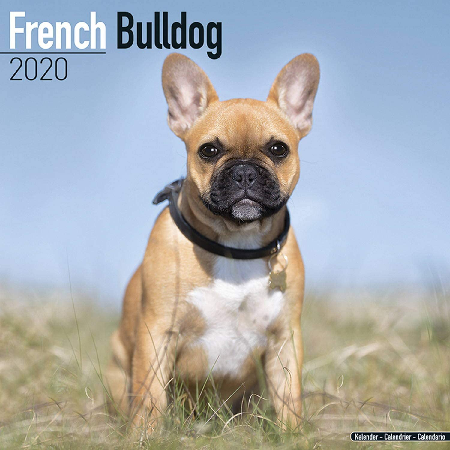 French Bulldog Calendar 2020 Dog Breed Calendar Wall Calendar 2019 2020