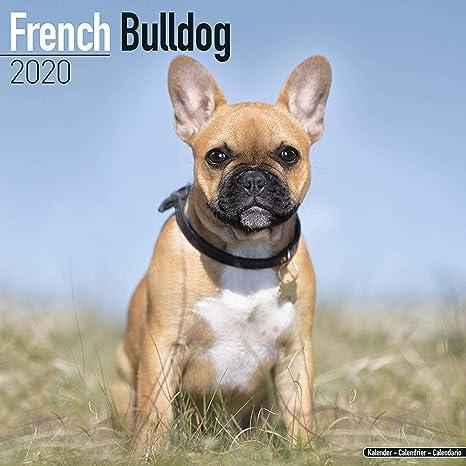 French Bulldog Calendar 2020 - Dog Breed Calendar - Wall Calendar 2019-2020
