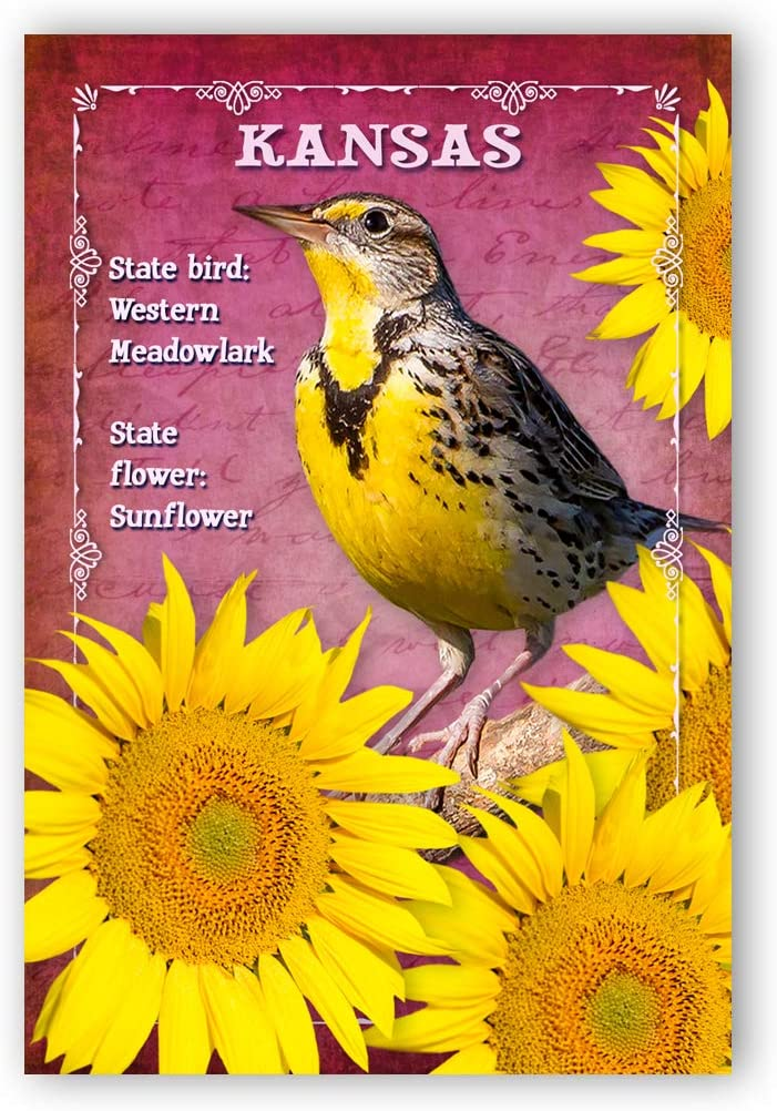 Amazon Com Kansas Bird And Flower Postcard Set Of 20 Identical Postcards Ks Symbols Post Cards Made In Usa Office Products