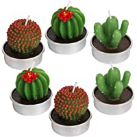 AMASKY Handmade Delicate Succulent Cactus Candles for Birthday Party Wedding Spa Home Decoration. (6 Pack)