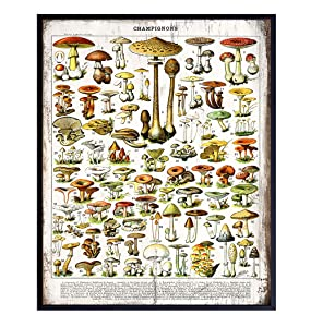 Dining Room, Kitchen Decor - Rustic Vintage Botanical Mushrooms Chart - Larousse Gastronomique Wood Sign Photo Wall Art for Cafe, Restaurant - Unique Housewarming Gift -8x10 Boho Farmhouse Style