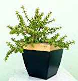 Ecofynd® 8 inches Midland Metal Planter | Indoor Outdoor Balcony Tapered Plant Pot | Home Garden Office Flowering Container Cover, Black, Set of 2