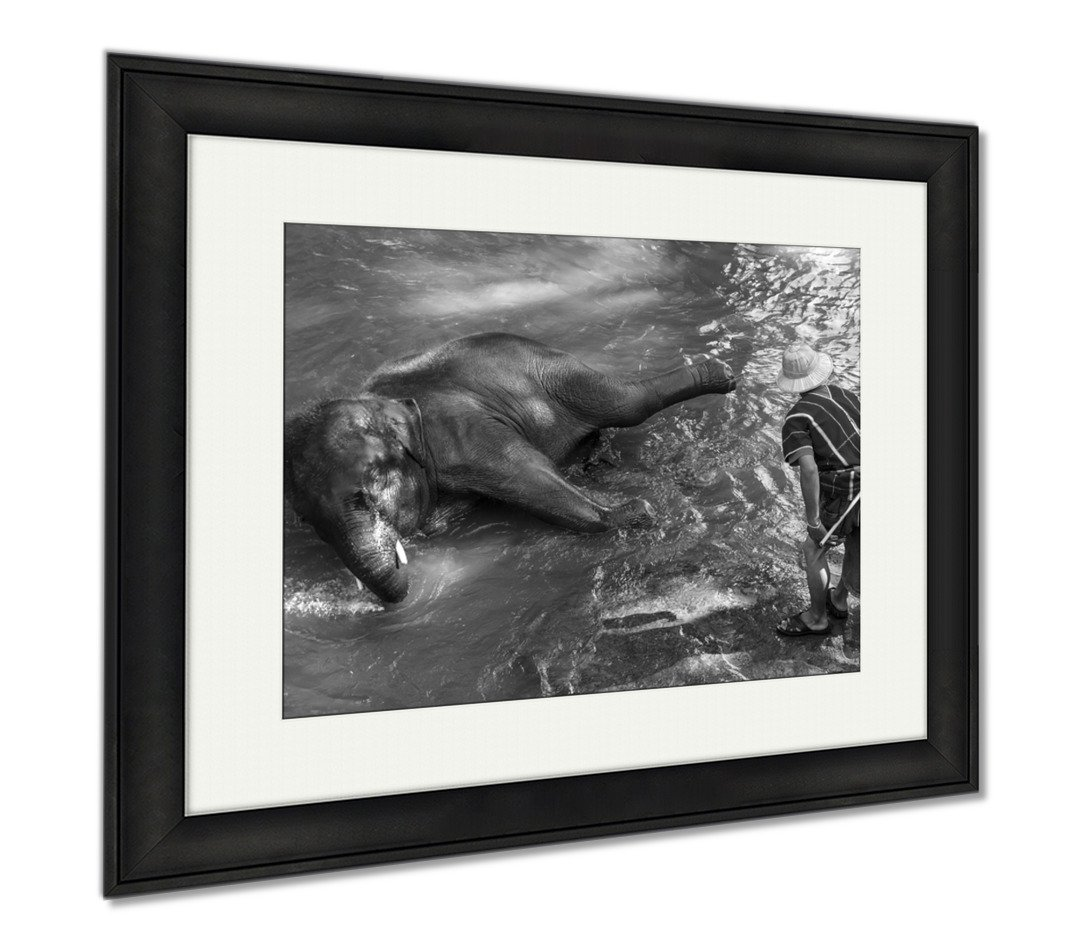 Ashley Framed Prints Thai Young Elephant Was Take A Bath With Mahout, Office/Home/Kitchen Decor, Black/White, 30x35 (frame size), Black Frame, AG5256553 by Ashley Framed Prints