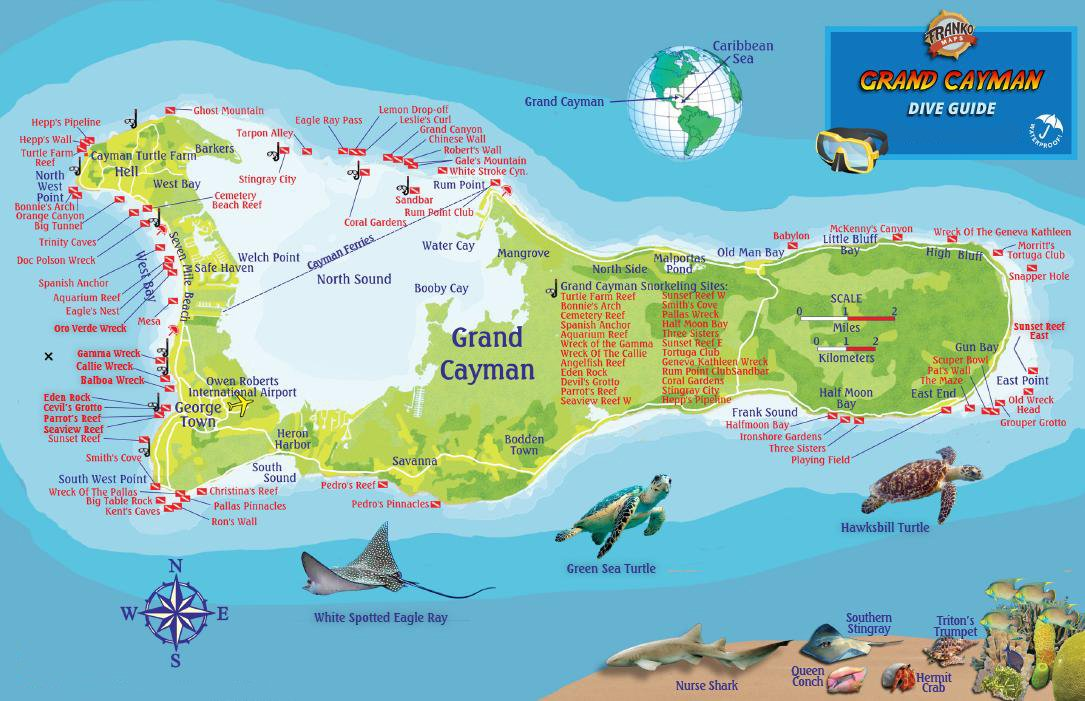 photograph relating to Printable Map of Grand Cayman named Grand Cayman Island Dive Map Reef Creatures Expert Franko